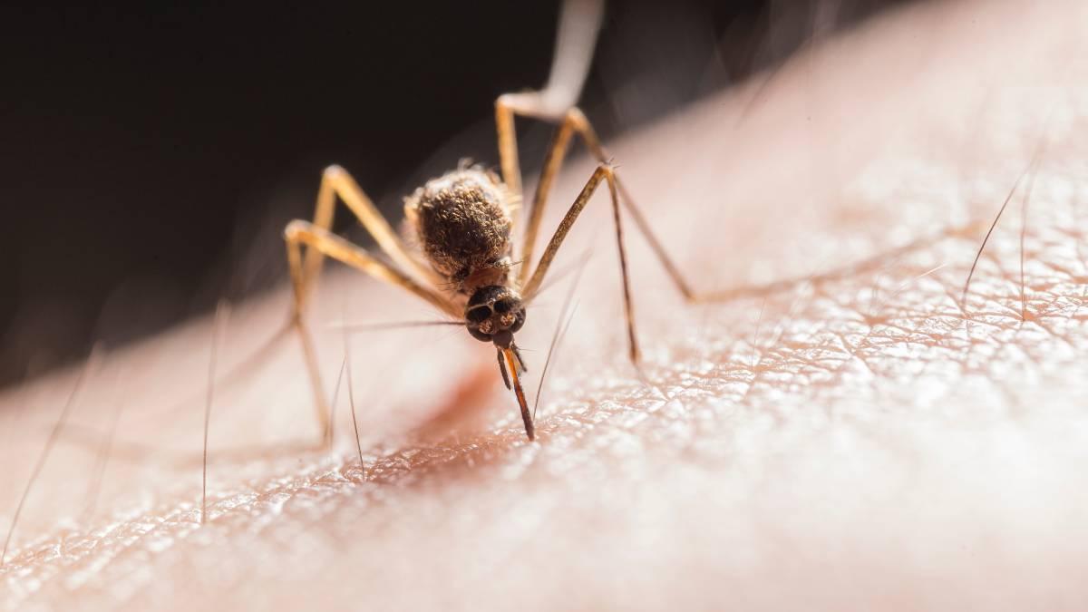 Evitar picaduras mosquitos